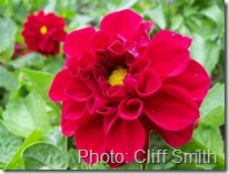 flower vivid