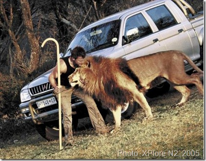 Dave Salmoni with Lion, Thornybush Game Reserve, 2005