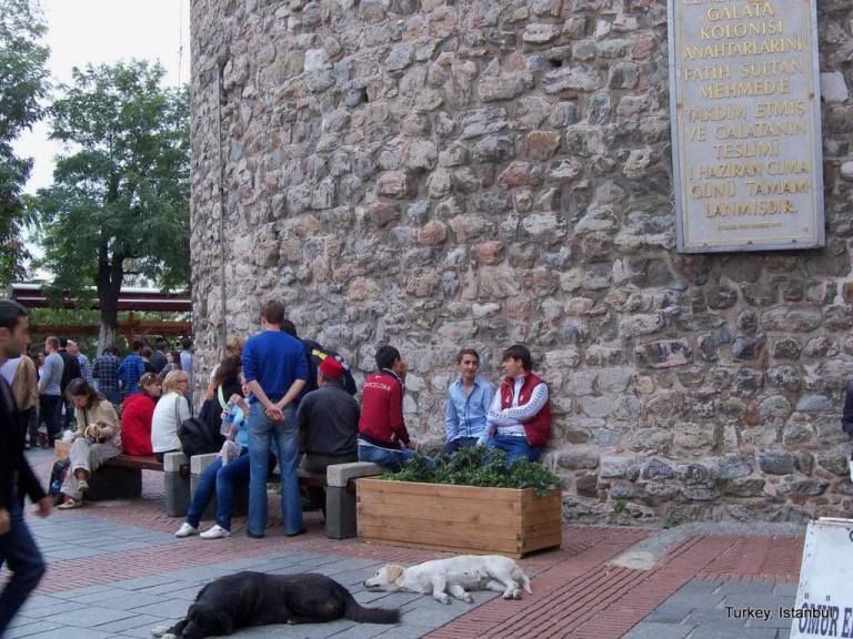 კატების ქალაქი, რომელიც ძაღლებმა გადაარჩინეს - მე მოგზაური