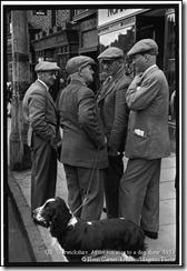 1953 Dog show