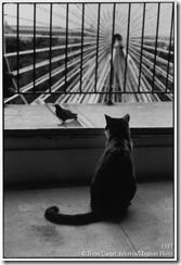 1987 Cat