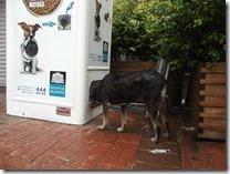 Pugedon vending machine