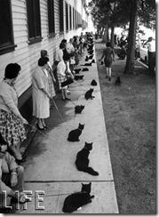 150304-black-cats-01