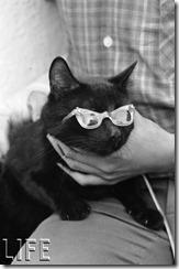 150304-black-cats-05