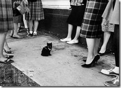 150304-black-cats-07