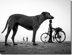 Dog-Story-By-Neenad-Arul-02