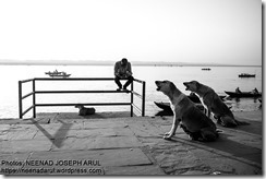Dog-Story-By-Neenad-Arul-04