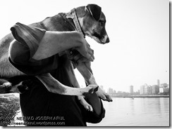 Dog-Story-By-Neenad-Arul-06