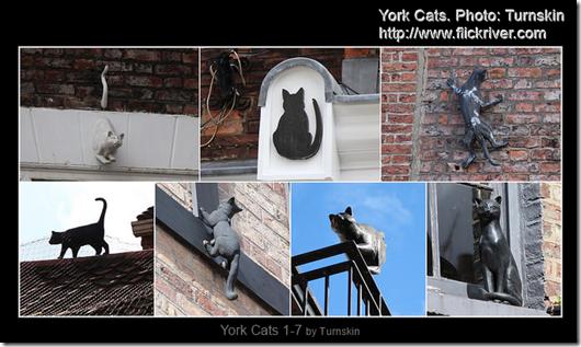 York Cats 2