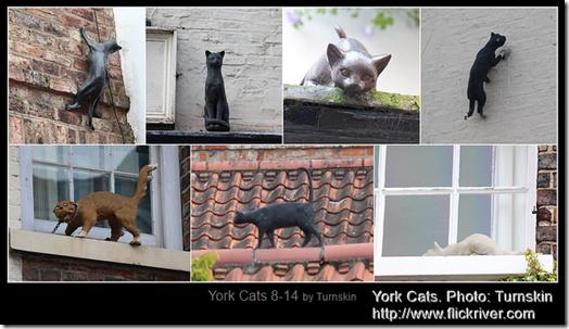 York Cats