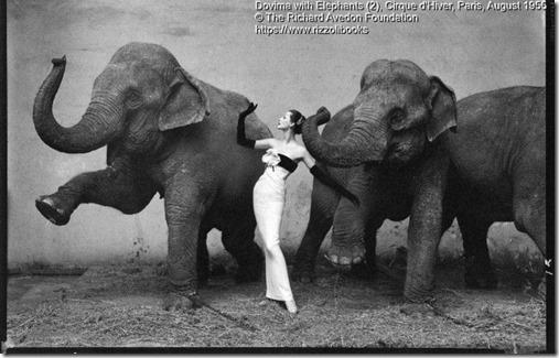 Dovima with Elephants 2