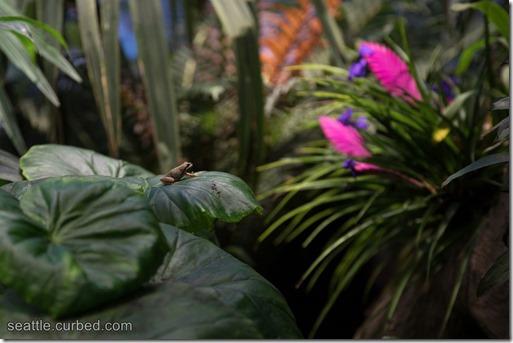 Amazon Spheres frog