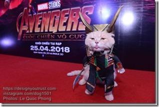 Cat-named-Dog-10_thumb2