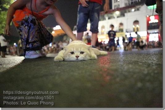 Cat-named-Dog-1_thumb1