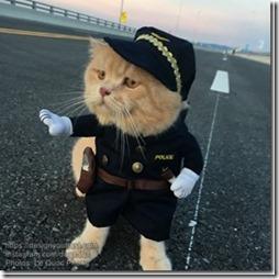 Cat-named-Dog-3_thumb1