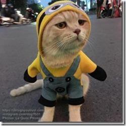 Cat-named-Dog-6_thumb1