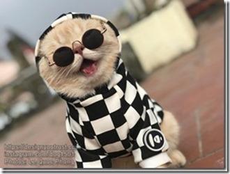Cat-named-Dog-8_thumb1