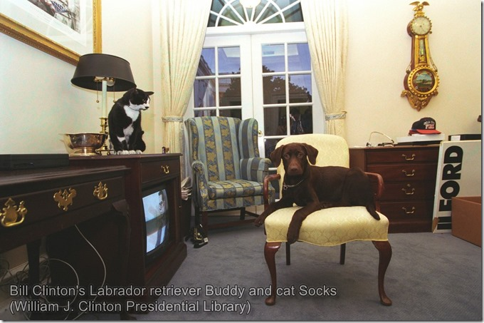 Bill Clinton's Labrador retriever Buddy and cat Socks