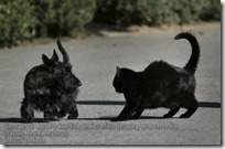 George W. Bush's Scottish terrier Miss Beazley and cat India