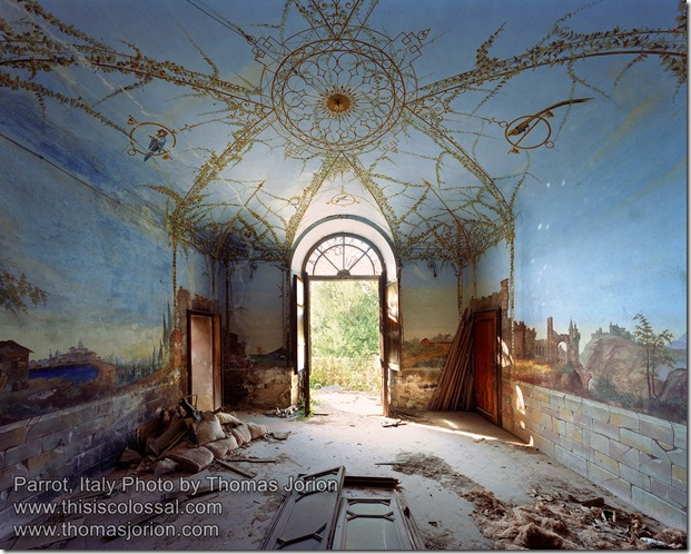 Thomas Jorion Parrot Italy
