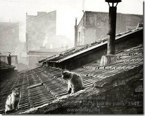 Edouard Boubat - Chats sur le toit de paris