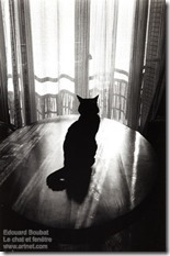 Edouard Boubat - Le chat