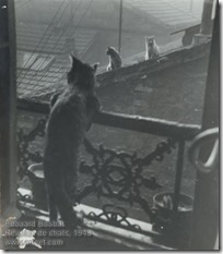 Edouard Boubat - Réunion de chats