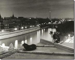 Robert Doisneau - Chats sur un toit