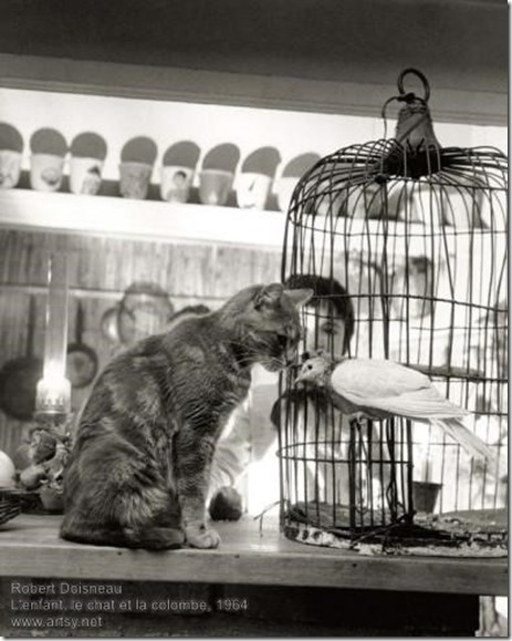 Robert Doisneau - L'enfant, le chat et la colombe