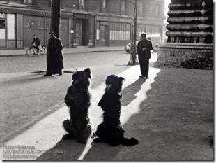 Robert Doisneau - Les Chiens de la Chapelle, 1953