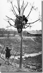 Sabine Weiss - Enfants sur l'arbre-1
