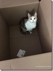 Cat in Amazon box (2)