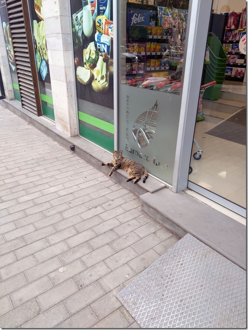 Cats of Tbilisi. EP