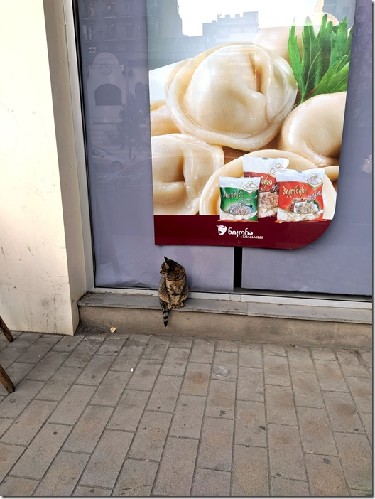 Cats of Tbilisi. Ravioli