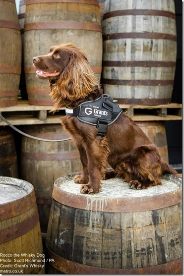 Rocco the Whisky Dog